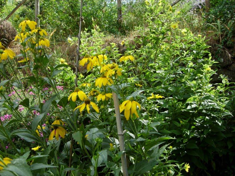 Iris libellule dal giardino di vitamina fiori di fine - Fiori di giardino ...