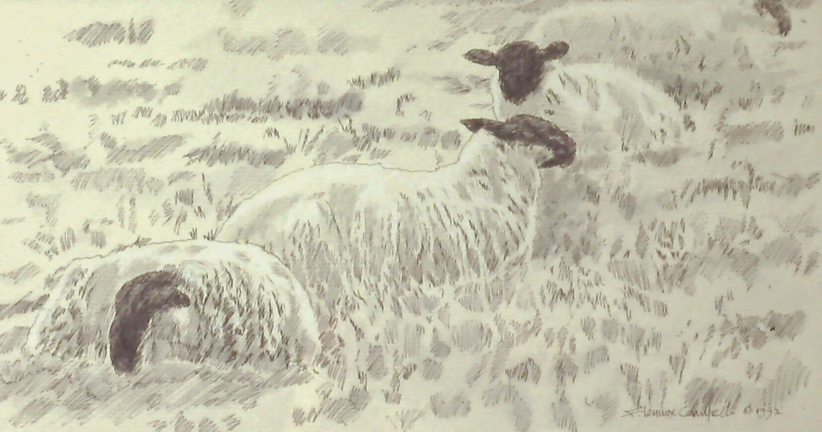 Blackface Highlanders, near Glamis Castle, Forfar, Angus, Scotland  20x40 inches. Pen and ink wash on paper, c. 1992 by F. Lennox Campello