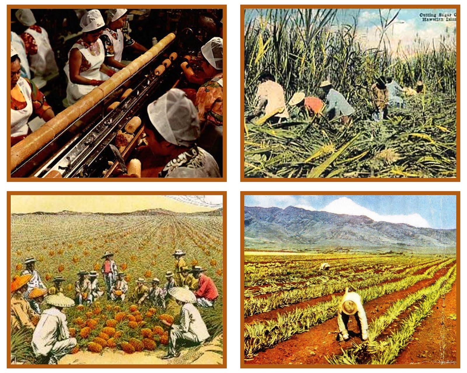 http://3.bp.blogspot.com/-zh7FodWbbI4/TXO_VHN5NjI/AAAAAAAAEec/oJ1e93PeYts/s1600/Plantation%2Bworkers1.jpg