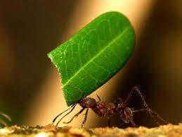 Tem formigas no seu jardim?
