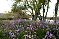 Lila en primavera.