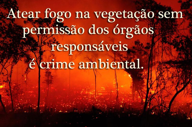 crime ambiental - foto:© Luiz Fernandes