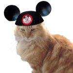 Cats of Disneyland