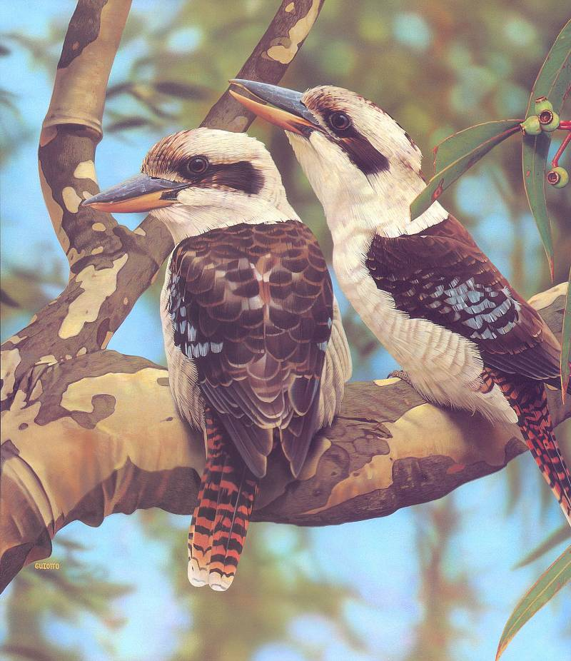 Somediffrent: Amazing Birds Painting