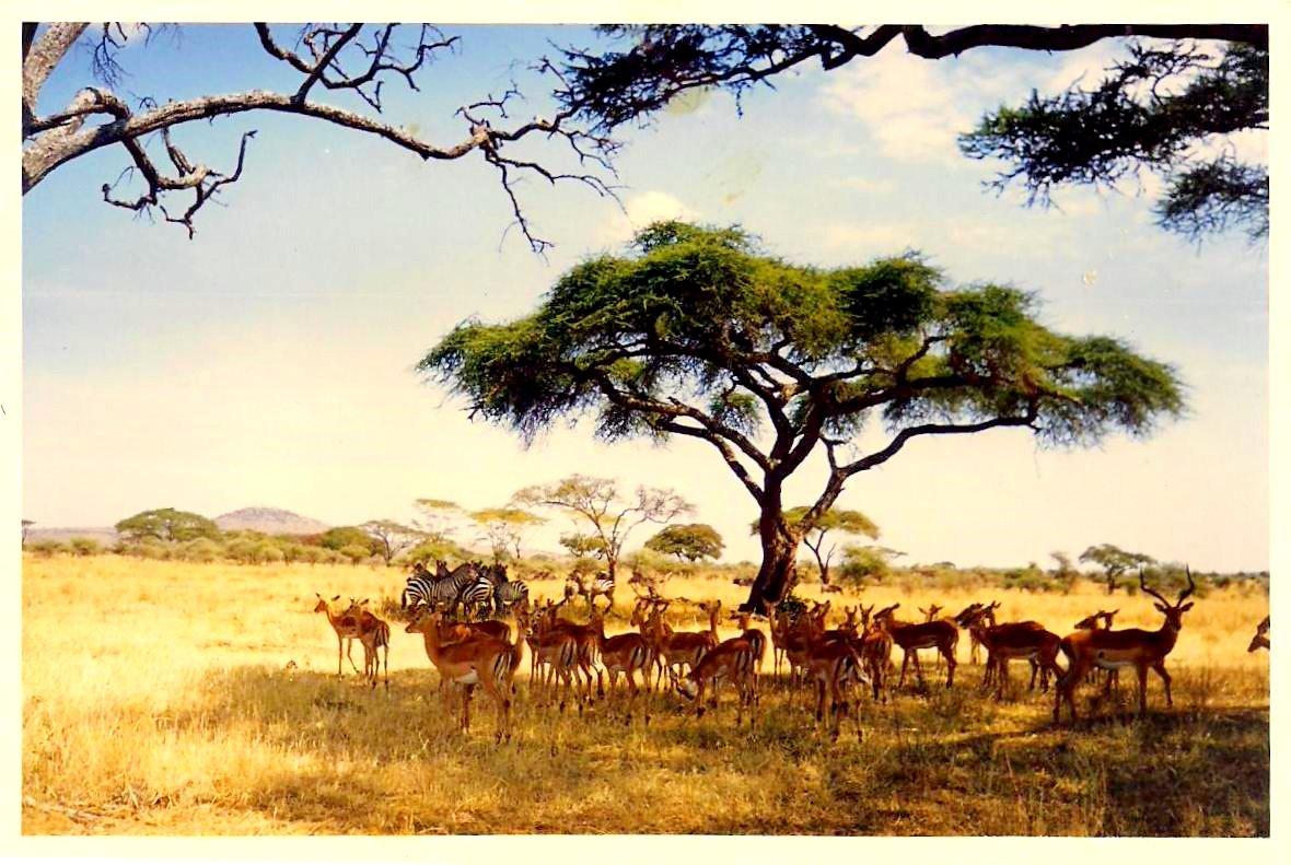 Travel Trip Journey Serengeti National Park Tanzania