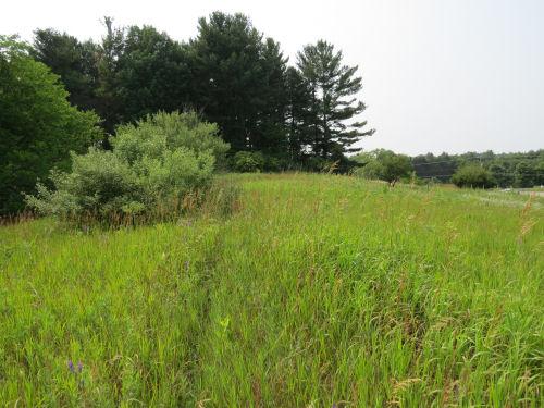 overgrown field