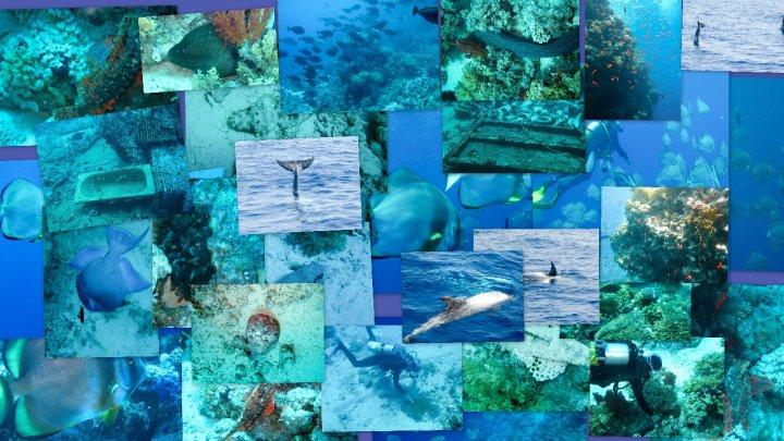 Reef oasis dive club - Reef oasis dive club ...