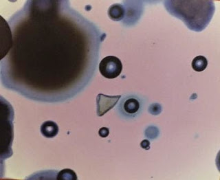 Microbeads_from_mouth_of_Four_Mile_Creek
