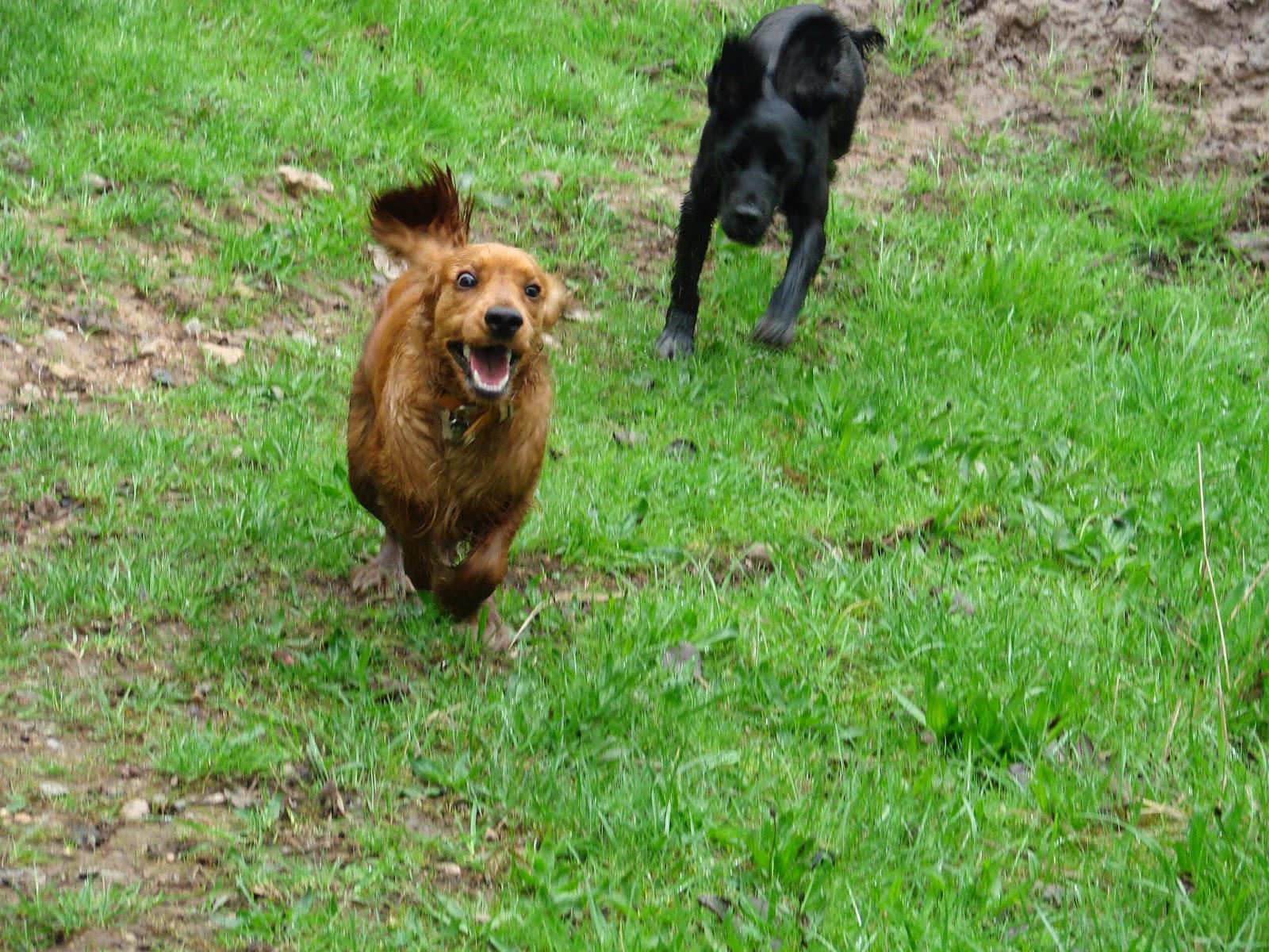 Dog Walks Gedling