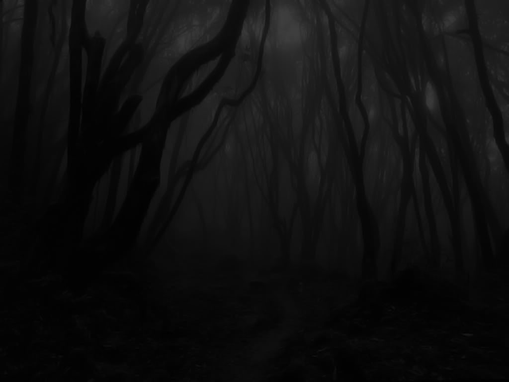 Dark, Dark Forest