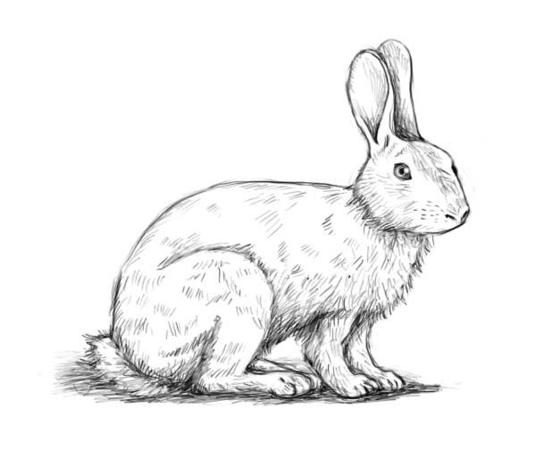 Corso di grafica e disegno per imparare a disegnare come for Disegno coniglio per bambini