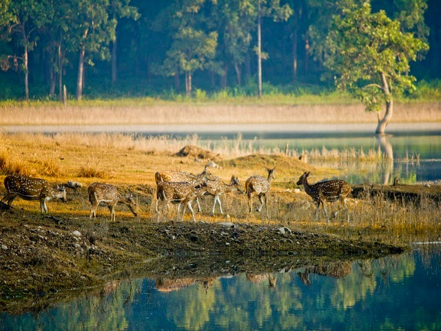 Madhya Pradesh - Pench National Park