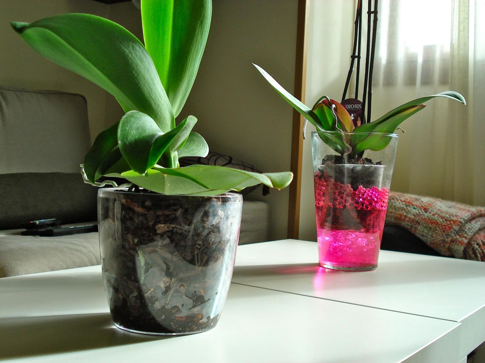 Orquídeas sin flor