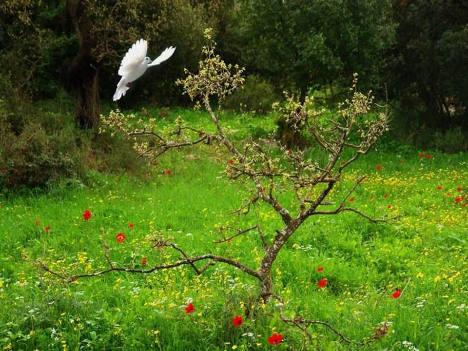 如今回味纯纯相思情 (rú jīn huí wèi chún chún xiāng sī qíng) - Now remember that innocent lovesickness 难忘旧日的柔情 (nán wàng jiù rì dí róuqíng) - Unforgettable past love tender moment