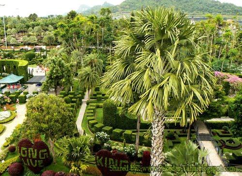 Nong Nooch Tropical Garden-6