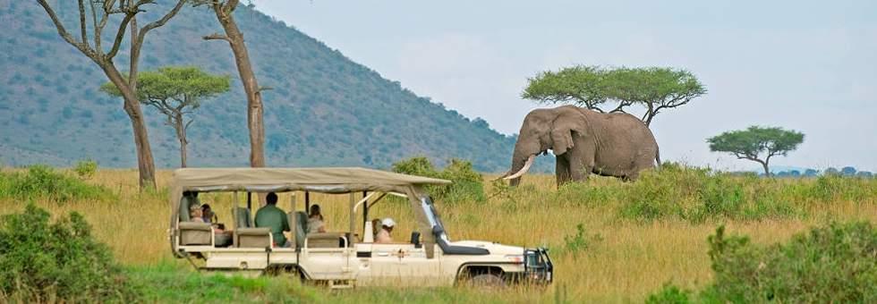 Kenya Tanzania Safaris, Masai Mara Wildlife Tours, Serengeti Trips