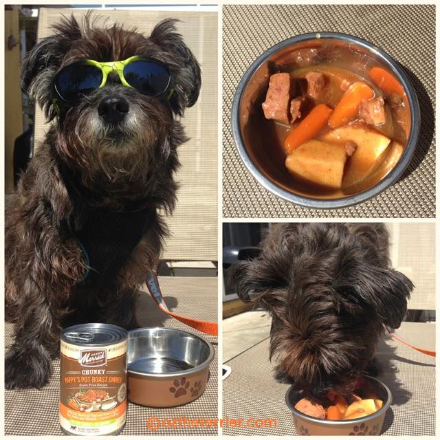 Is Merrick Dog Food Too High Protein