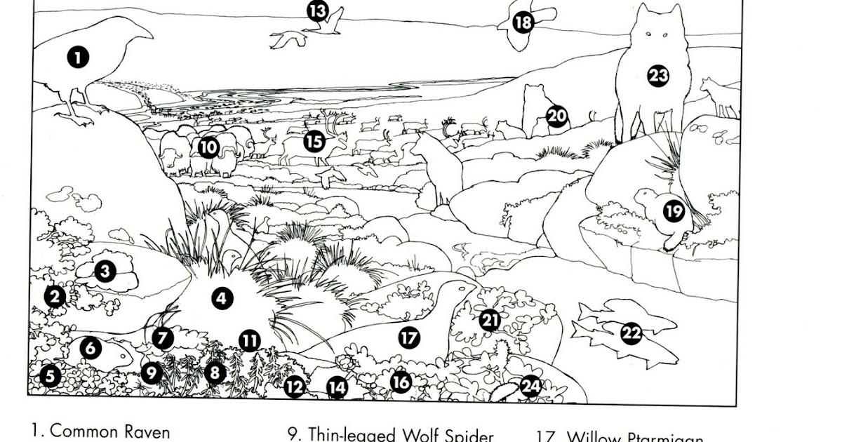 biodiversidad forestal  biodiversidad forestal usa  tundra