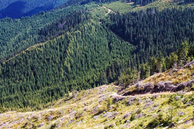 defrișare despădurire Călimani parc național natural impact ecologic ecological deforestation logging Romania eastern Europe Carpathian mountains