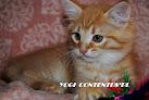 YOGI Contentus*PL