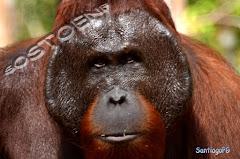 Fauna en Indonesia Septiembre 2017