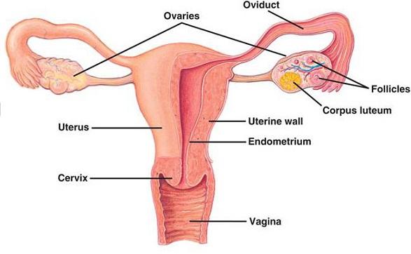 Bạn đã biết gì về ung thư buồng trứng? - Ảnh 1