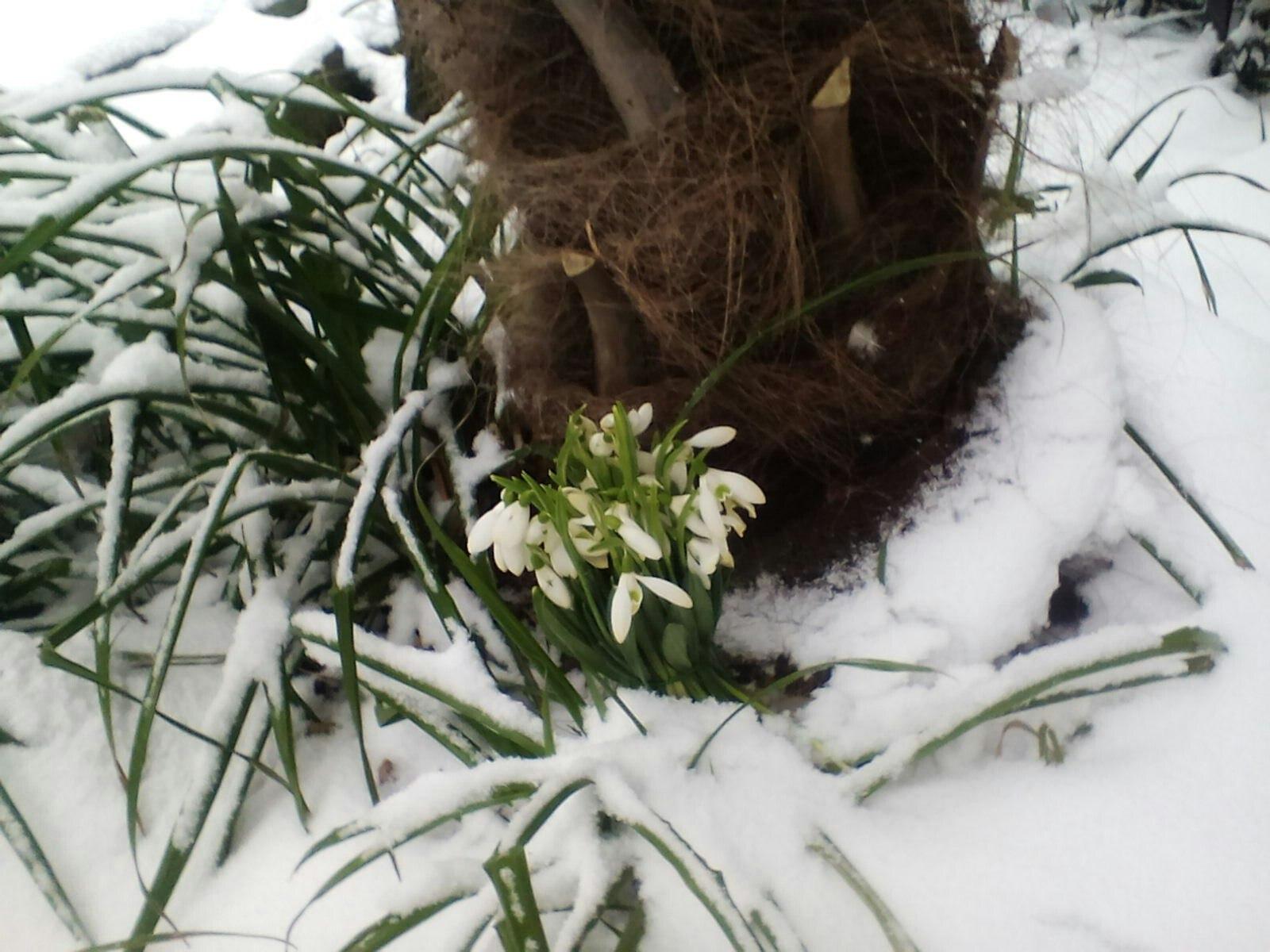 Стих как пришла зима