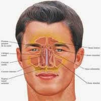 Testimoni Sembuhkan Penyakit Sinusitis dengan AgaricTop