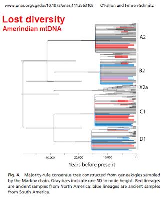 lost genetic diversity Amerindian