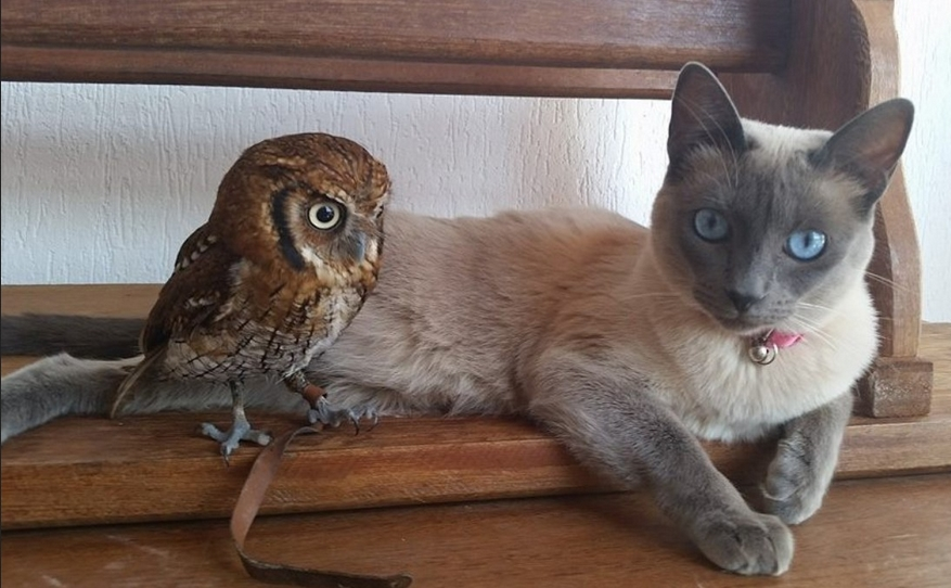 Tiny Wide-Eyed Owl Allows Curious Cat Friend To Pet Him (VIDEO)
