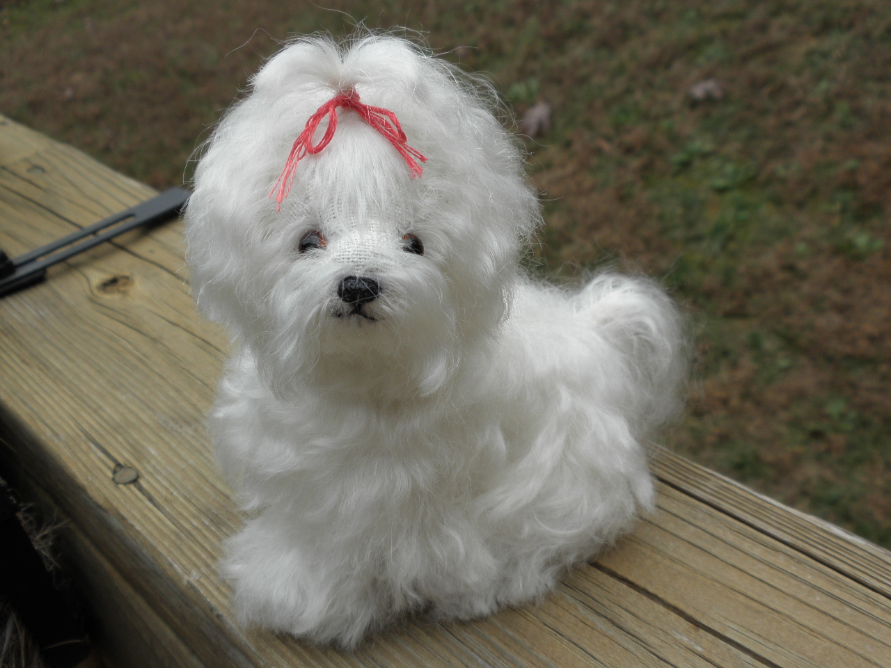 Teddy Bear Dogs Full Grown | Dog Breeds Picture