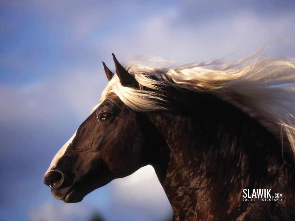 Fantastic   Wallpaper Horse Fairy - Slawik-horse-wallpapers-horses-6070990-1024-768  2018_608434.jpg