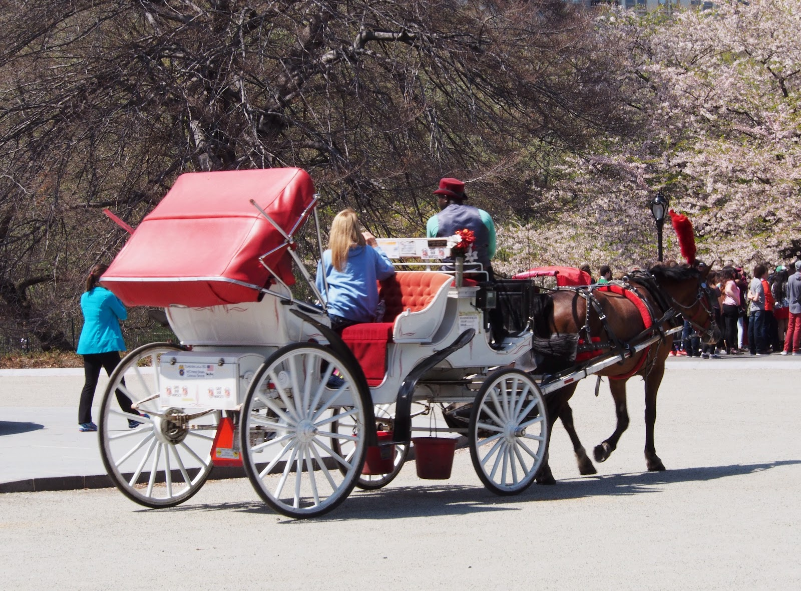 Carriage Rides. Cherry Blossoms. #frombehind #carriagerides #cherryblossoms #nyc 2014