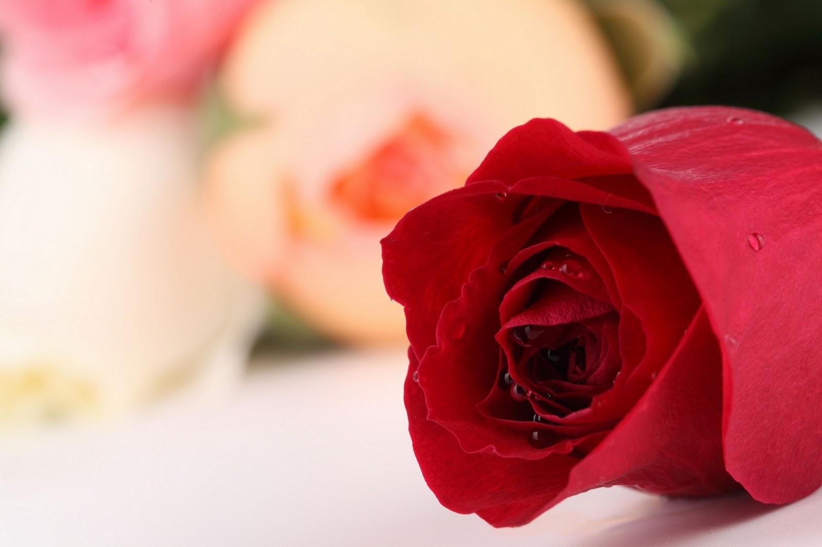 http://3.bp.blogspot.com/-znWF_TfBuTQ/TnuQqyOR2iI/AAAAAAAAOOs/lByaejmIHoU/s1600/2.jpg