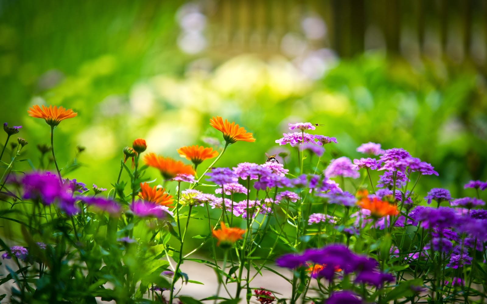STAR HD PHOTOS: Spring Flowers HD Wallpapers