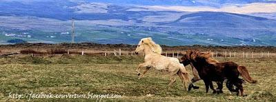 Couverture facebook chevaux sauvages