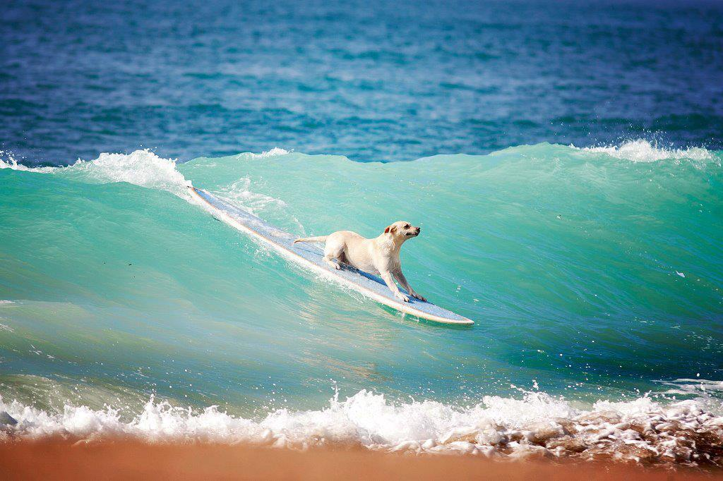 offshore winds surfing dogs