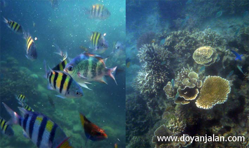 Underwater Pulau Perak