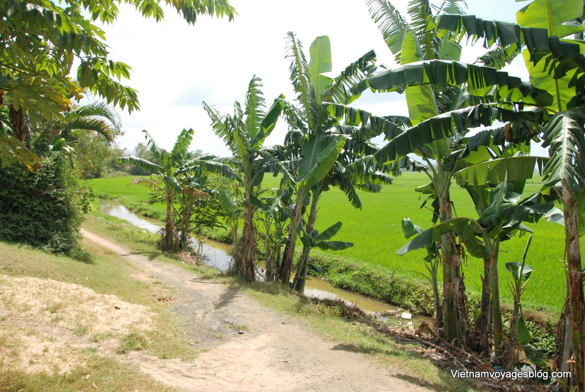 Phú Yên vựa lúa của miền trung