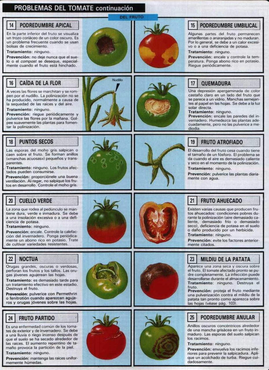 como plantar tomates en macetas