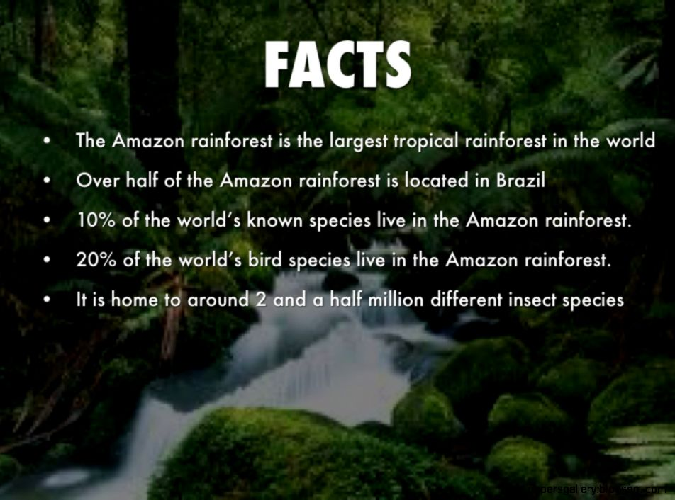 The rainforest   ThingLink