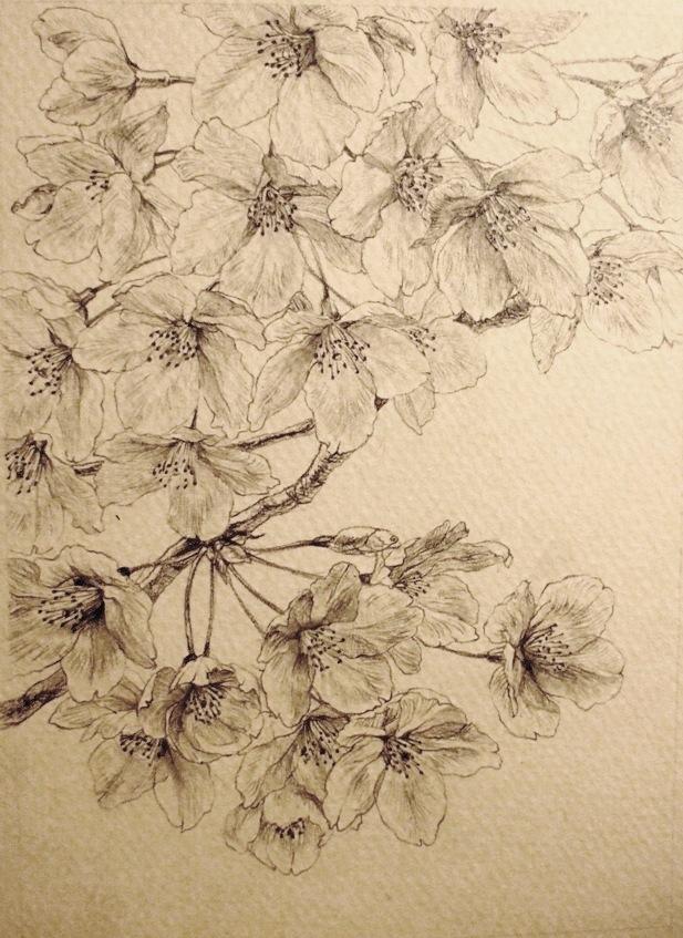 Pittura giapponese di shoko okumura someiyoshino tipico for Disegni tradizionali giapponesi