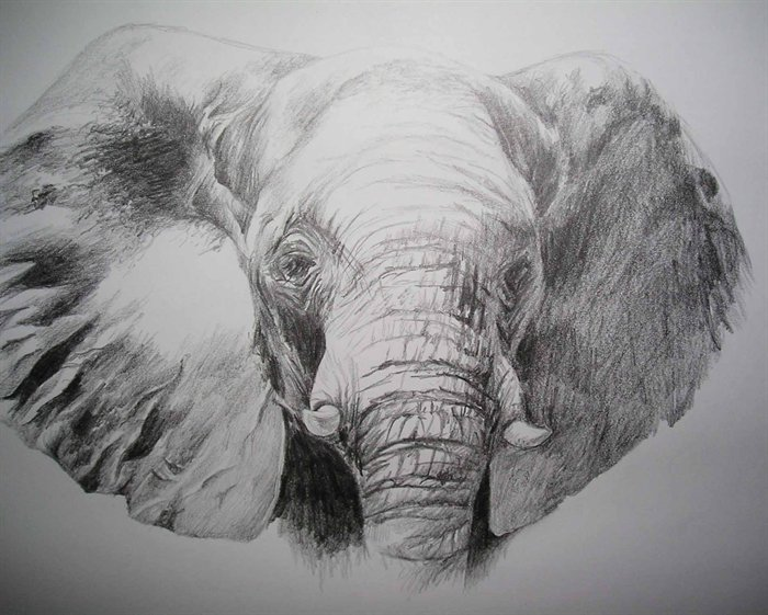 elephant face drawing - photo #5
