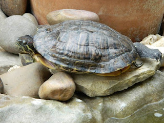 turtle, wordless wednesday