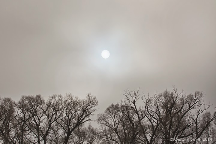 trees sun fog clearing arroyo hondo new mexico nm