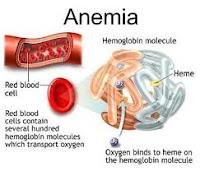 obat herbal penyakit anemia