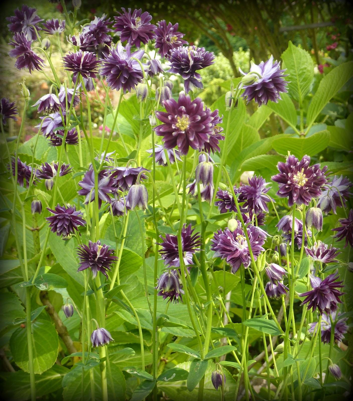 Le jardin d 39 oscar juin au jardin for Juin au jardin