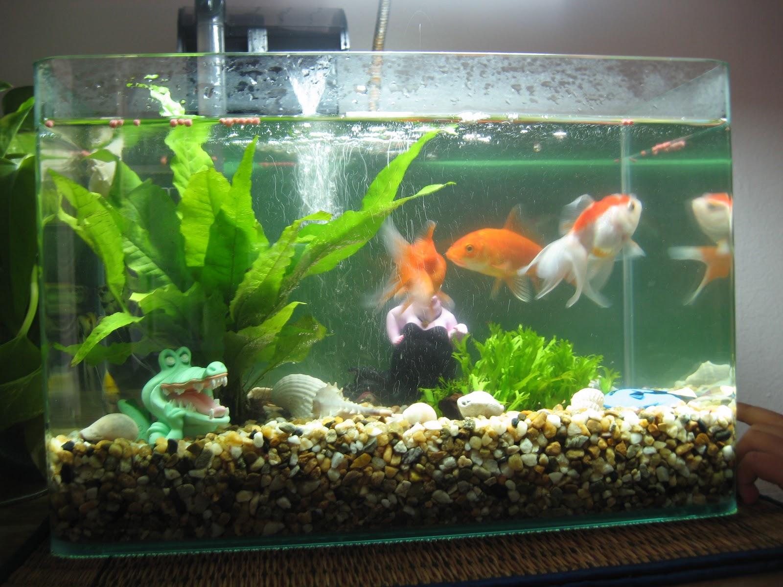 Какие условия для рыбок в домашних условиях 238