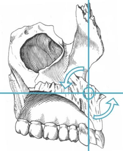 Движение верхней челюсти в сагиттальной плоскости на фазе флексии краниосакрального ритма