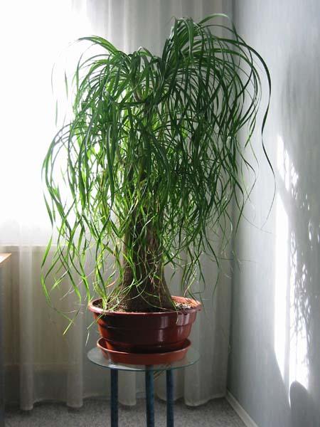 Estilo y hogar plantas de interior resistentes para decorar - Plantas de interior altas ...